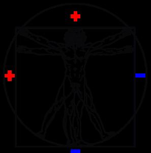 polaridad cuerpo humano